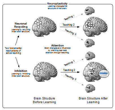 FUNDAMENTAL CONCEPTS BRIDGING EDUCATION AND THE BRAIN